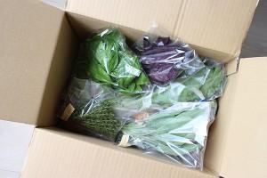のらの野菜 Nora's beggies